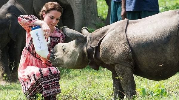 Anak Badak Disusui Oleh The Duke and Duchess of Cambridge