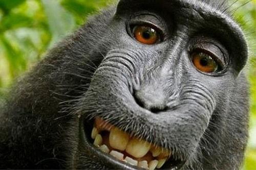 Monyet Liar Sedang Foto Selfie