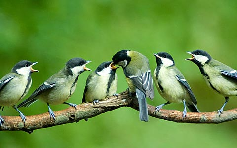 Sanggar Burung
